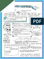 Lipton.pdf