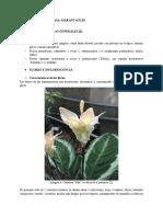 Marantaceae.docx