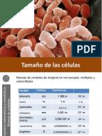 Tamaño de las células
