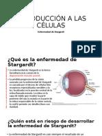 enfermedad de Stargardt