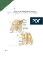 Anatomi thoracic wall