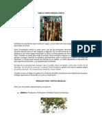 Varita magica.pdf
