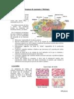 Resumen de anatomía y fisiología