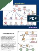 lez. 8 e 9 imm. specifica and antigen presentation.pdf