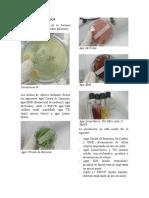 RESULTADOS  Y ANALISIS - Propiedades bioquimicas para identificar microorganismos