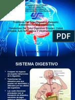 Trastorno Del Tubo Digestivo Delgado.pptx