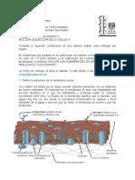 Cuestionario 1- BMC..docx