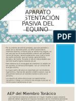 Aparato-sustentación-pasiva-del-equino-11