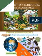 Componentes y esctructura de los ecosistemas