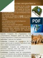 Ecología conceptos básicos