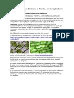 Guia para el estudio de Célula y Tejidos Vegetales (1).doc