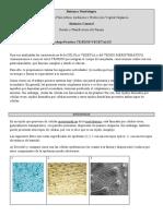 Practico Tejidos vegetales-30marzo (1).docx