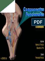 n-craneales-CF (2).pdf