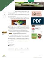 Como plantar alho-poró _ Blog da Plantei