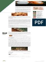 Como plantar cebola _ Blog da Plantei