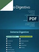 Sistema Digestivo histología