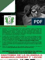 DOCUMENTO DE APOYO A LA DOCENCIA VÍA VIRTUAL13AL19ABRIL.pdf