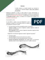 Osteología Miembro Superior