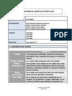 Informe Morfo lab6.docx