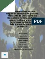 P2.pptx
