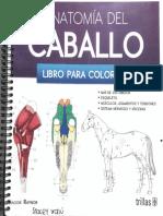 Anatomía del caballo, libro para colorear