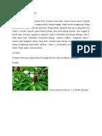 Costaceae