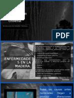 Patologias en la madera chilena Rebolledo Vallejos, Berta.pptx