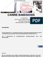 Canine Babesiosis - Dr.Jibachha Sah,M.V.Sc,Lecturer,NPI
