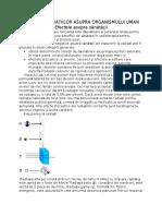 11.efectele radiatiilor asupra org uman.docx