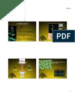 Fotomorfogenesis.pdf