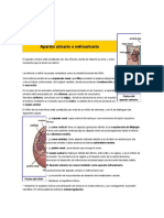 Aparato urinario o nefrourinario