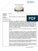 ficha-arroz.pdf