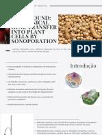 Transformação de Plantas - Ultrassom apresentação