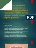 Caractere anatomo-fiziologice și structura histologică ale epiteliului mucoasei cavității bucale.pptx