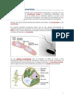 8 a.Celulas procariotas y eucariotas