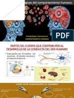 4.- BASES PSICOFISIOLOGICAS DEL CH