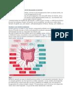 Rolul microbiotei intestinale în alimentație și sănătate