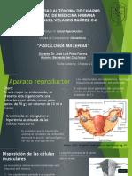 Fisiología materna en el embarazo