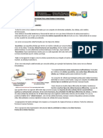 ACTIVIDAD+célula+Humana.pdf