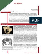 anatomia embarazo