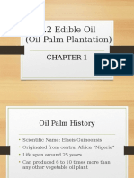 1.2_Edible_Oil_Oil_Palm_plantation