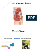 Module 6 - Muscular System Part A student (3).pptx