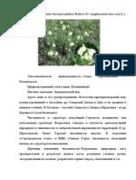Зайцев 8-В Растение Луганщины.docx