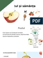 Fructul și sămânța.pptx