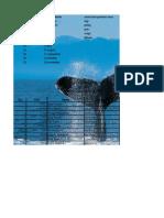 Comp App Excel II