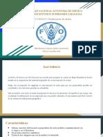 FAO UNESCO.pptx
