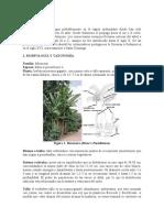 botanica taxonomia
