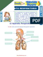 El-Aparato-Respiratorio-para-Tercer-Grado-de-Primaria