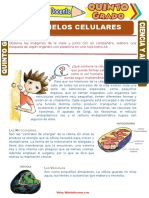 Organelos-Celulares-para-Quinto-Grado-de-Primaria.doc
