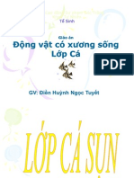 Lop Ca Ca sun